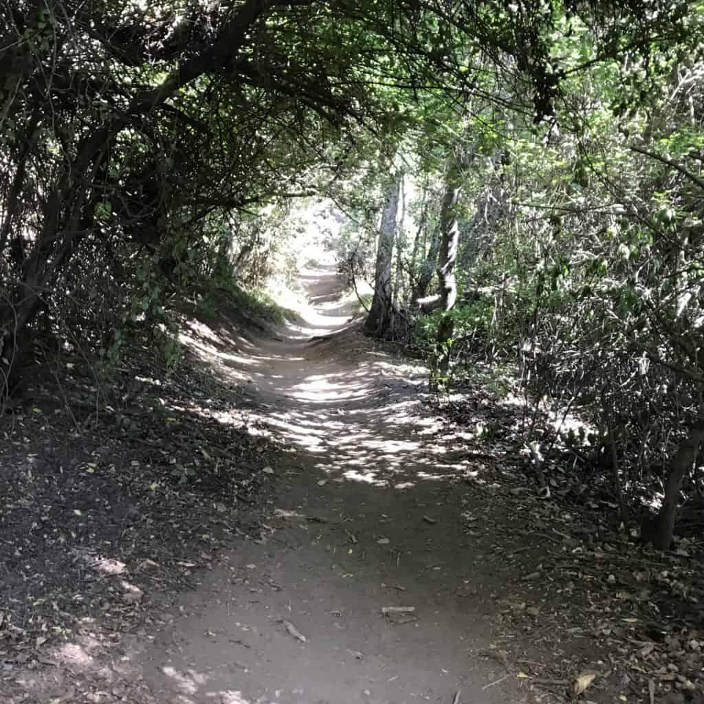 Path to get up to Cerro Campanario.