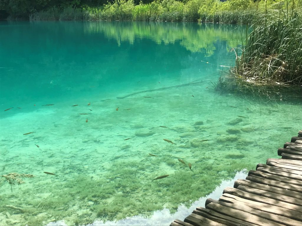 Fish can be seen everywhere at Plitvice Lakes National Park.