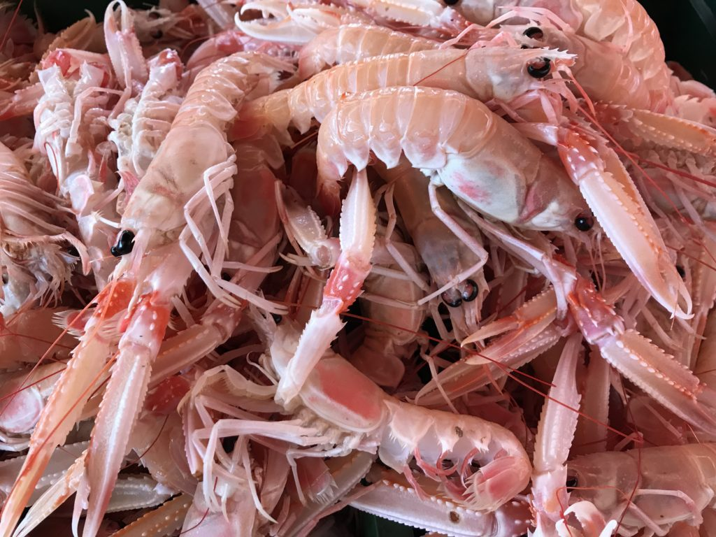 A photo of shrimp from the Fish Market in Split.
