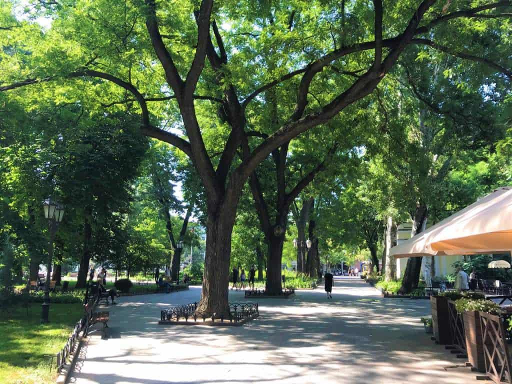 Tree-lined street in Odessa.