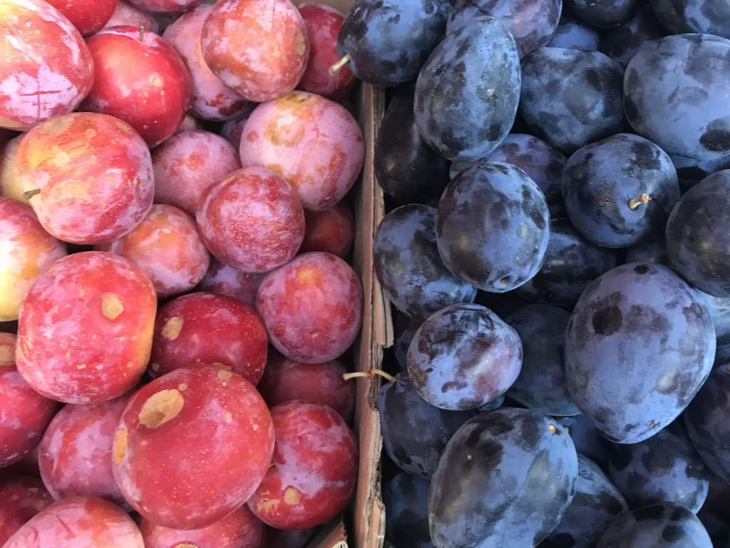 A box of red and purple plums.