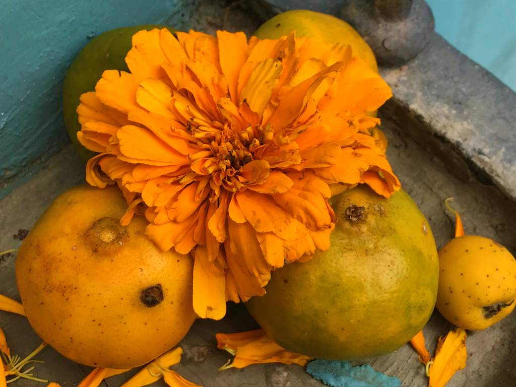 Marigold and oranges for Day of the Dead.