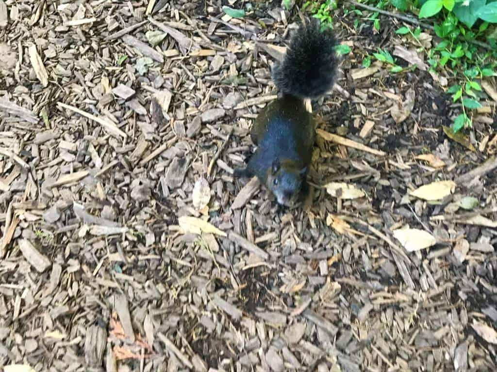 A curious squirrel at Vivero Coyoacán.