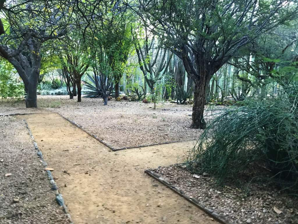 A dirt path winding through the botanical gardens.