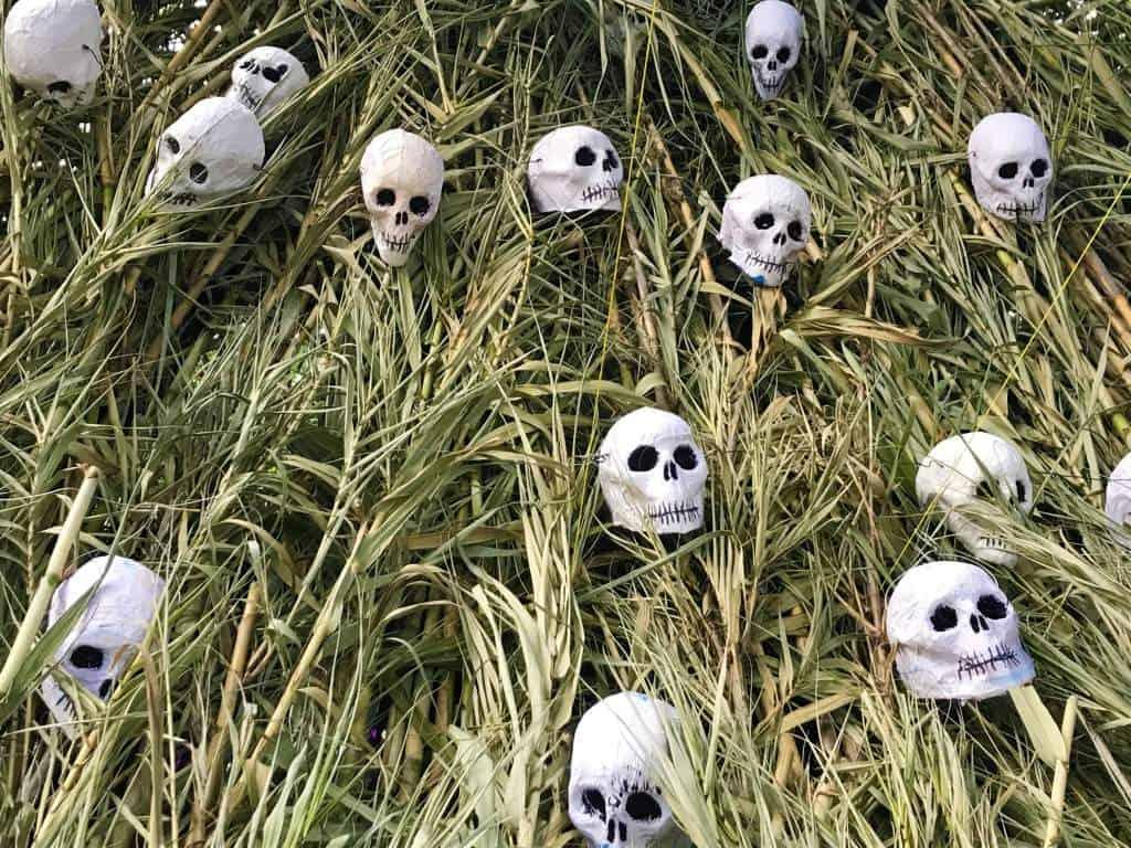 Skulls on a grass background.