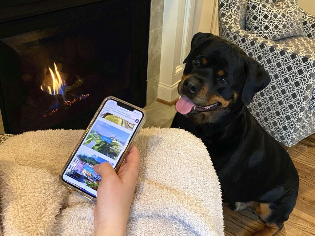 A dog watching his owner look at her phone.