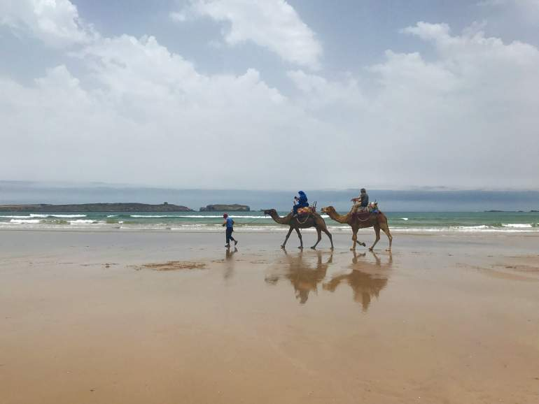 Two camels walking on the beach in Essaouira.