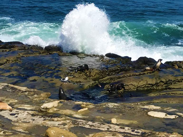 A wave crashing above sea lion pups playing in a tide pool in La Jolla.