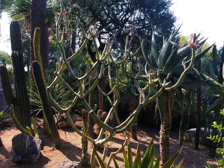 Cacti in Monaco.