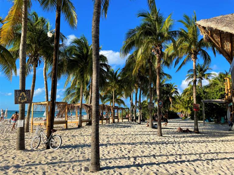 A beach with palm trees in Isla Mujeres.