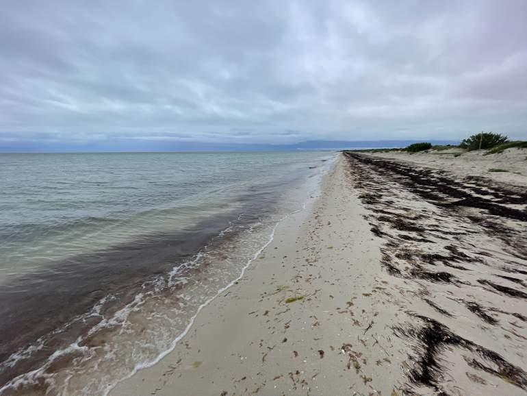 A seaweed-filled beach near Las Coloradads.
