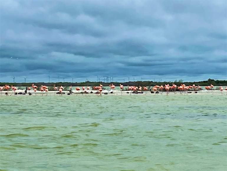 Flamingos standing on the beach, which is the last part of the Las Coloradas tour.