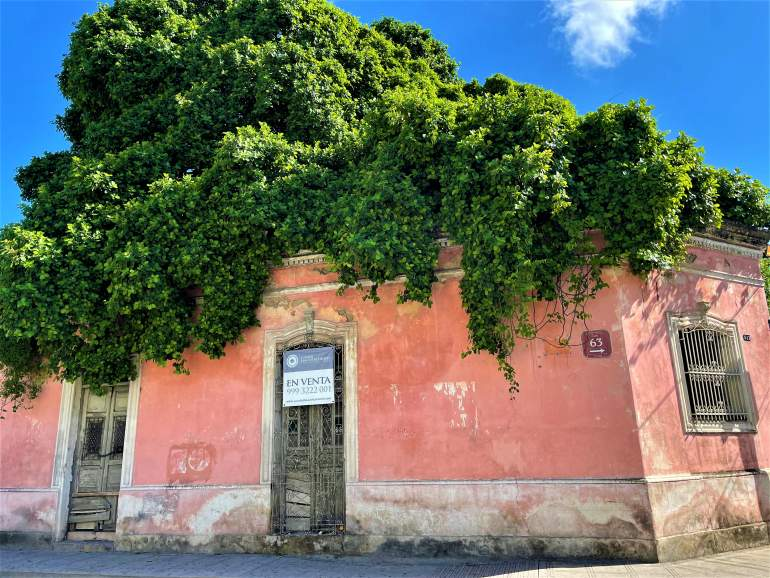 An abandoned pink building with a tree growing on top of its roof.