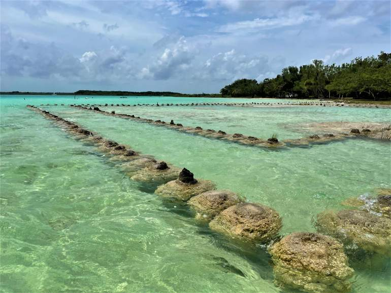 A series of stromatolites in Bacalar.